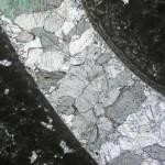 Foto 4. Sección de una concha de almeja fosilizada de agua dulce cubierta, externa e internamente, por un crecimiento microbialítico. Yacimiento de los acantilados de Abeu en Ribadesella (Asturias).
