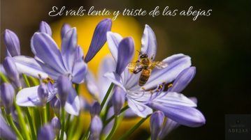 vals lento abejas