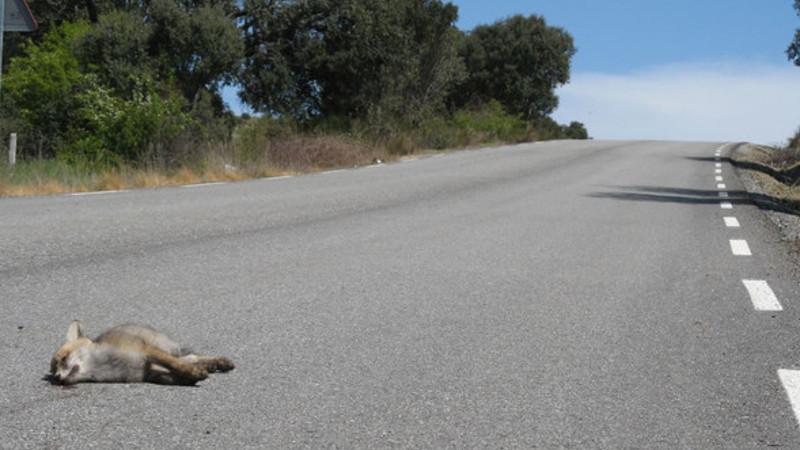atraccion-fatal-carreteras