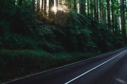 ben-blennerhassett-road-nautre-unsplash