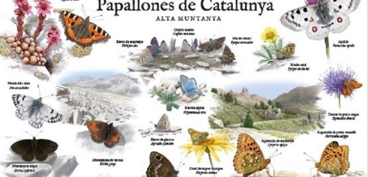 ¡Las mariposas de Cataluña en posters!