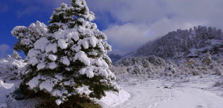 Aprobada la declaración de Sierra de las Nieves como Parque Nacional