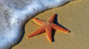 estrella-mares-europeos