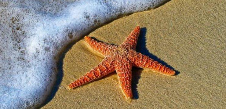 El calentamiento del agua está matando a la estrellas de mar